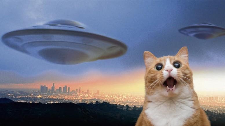 Версия: Кошки - это инопланетяне, заброшенные в качестве наблюдателей