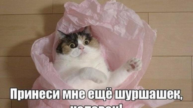Из жизни домашних котов. Основано на реальных событиях