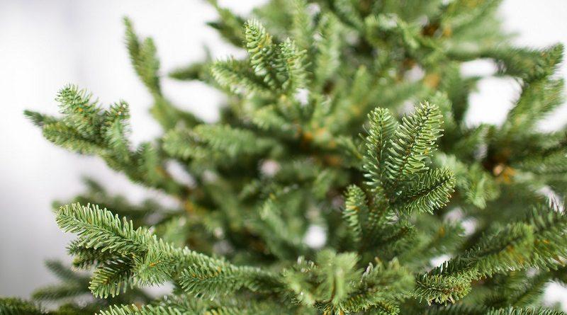 Где купить Датские елки в Москве с доставкой у официального поставщика