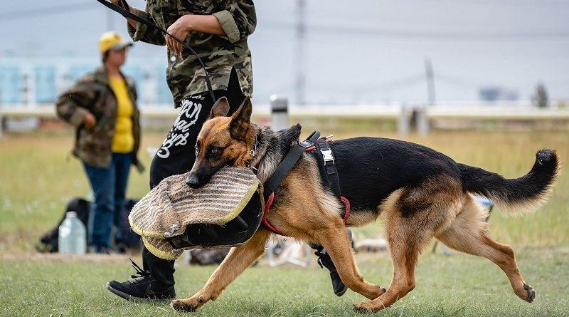 Для чего необходима дрессировка собак и где заказать услугу в Киеве
