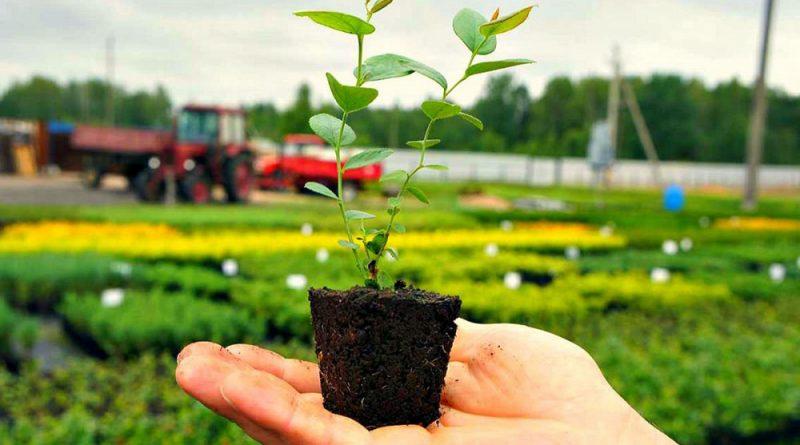 Горшок для выращивания саженцев где купить онлайн